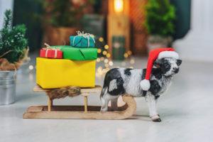 Vuoi il tuo regalo per Natale? Acquistalo entro domenica 13 dicembre!